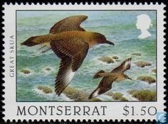 Montserrat - Scavengers of the Sky 1997