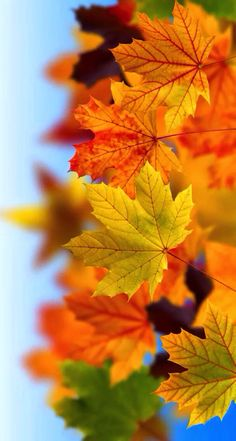 Even if you are not fond of autumn, this collection of fall iPhone wallpaper . Floral Wallpaper Iphone, Fall Wallpaper, Cellphone Wallpaper, Colorful Wallpaper, Flower Wallpaper, Leaves Wallpaper, Mobile Wallpaper, Wallpaper Backgrounds, Beautiful Flowers Wallpapers