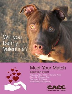 Meet Your Match Pet Adoption Event, Chicago Animal Care & Control - Pet Supplies My Animal, Animal Care, Pet Insurance Reviews, Animal Rescue League, Foster Dog, Dog Poster, Chicago, Animal Shelter, Shelter Dogs