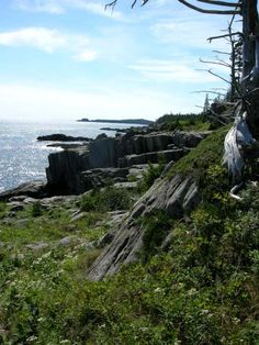The Bold Coast trail in Cutler, ME. I'd love to hike a bit of this trail!