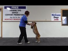 "Teach Your Dog To ""High Ten"""