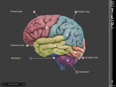 Brain is a free iPad app that features a model of the human brain. he app provides a three dimensional model of the human brain that students can rotate. To look at a specific part of the brain … Science Lessons, Science Experiments, Brain Science, Machine Learning Deep Learning, Brain Models, Brain Stem, Mobile Learning, School Projects, Kid Projects
