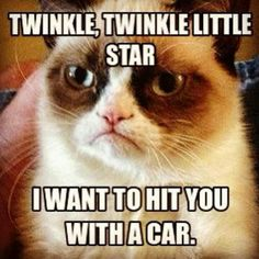 Do you love Grumpy cat. If you do, These Grumpy cat Memes work for you.These Grumpy cat Memes work are so funny and humor. Grumpy Cat Quotes, Gato Grumpy, Funny Grumpy Cat Memes, Funny Animal Jokes, Cute Funny Animals, Funny Animal Pictures, Funny Cats, Funny Jokes, Grumpy Kitty