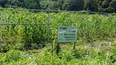 なたまめ普及会: 中村農園さん