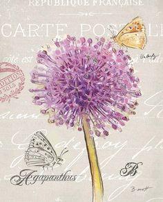 Sketchbook Agapanthus Canvas Art - Chad Barrett x Vintage Cards, Vintage Images, Chad Barrett, Arte Country, Shops, Flower Pictures, Botanical Art, Vintage Flowers, Backgrounds