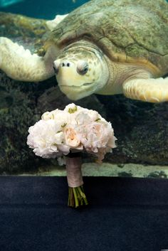 Cecelia & Michael's wedding at the South Carolina Aquarium. Design by Pure Luxe Bride. Photo by Reese Moore Photography