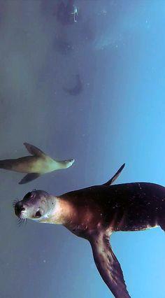 We now present: The Sea Lion Ballet