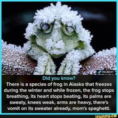 The Alaskan Wood Frog can still live after weeks of being frozen - WTF awesome fun facts! Wtf Fun Facts, True Facts, Funny Facts, Funny Memes, Random Facts, Crazy Facts, Strange Facts, The More You Know, Did You Know