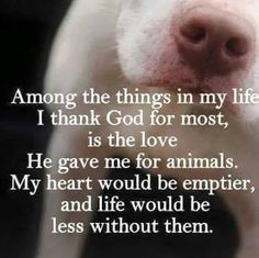 Among the things in my life I thank God for most, is the love He gave me for animals. My heart would be emptier, and life would be less without them.