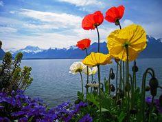 Printemps à Montreux, Switzerland