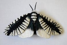 This moth is about 4 inches tall and 8 1/2 inches wide. The wings are made from fabric which is hand painted and embroidered with layer of thread