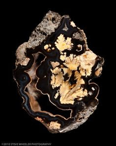 AGATE( Αχατης) Bouquet Plume Agate / Marfa, Texas looks like a husky head with a duck under chin Minerals And Gemstones, Crystals Minerals, Rocks And Minerals, Stones And Crystals, Cool Rocks, Beautiful Rocks, Rock Collection, Mineral Stone, Rocks And Gems