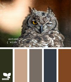blog of color ways from photos