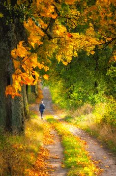 A walk down a country lane in autumn (Poland) by Piotr Wytrążek on 500px