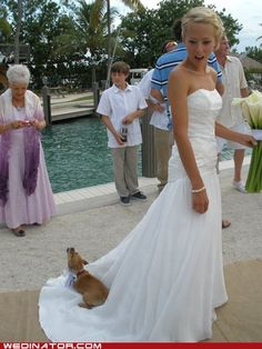 Having a #wedding pet can be risky!  Get some pet sitters ;)