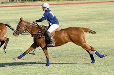 Polo Pony on www.CourtneyPrice.com