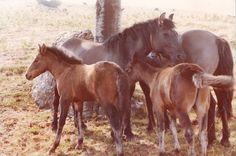 Cavalli a Casasco - COMO