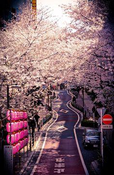Ai Nihon 愛日本: Hanami in Tokyo