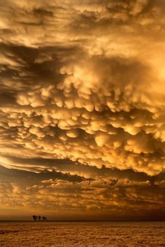 The sky of Kansas after a storm that produced a dozen tornadoes. Amazing Sunsets, Amazing Nature, Mammatus Clouds, Weather Cloud, Storm Clouds, Sunset Sky, Beautiful Sky, Natural Wonders, Mother Nature