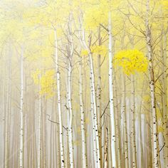 Aspens in Fog - Wall Mural & Photo Wallpaper - Photowall