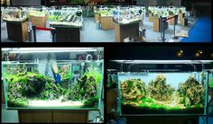 Aquascaping Live Contest at the Aqua Fair Asia (Guangzhou)  Great works ! ... pic shared by Oliver Knott on facebook ... Pin by Aqua Poolkoh