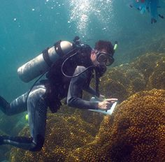 Todd LaJeunesse studies coral reefs and their response to the environmental threats they face.