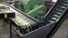 ZOCAPI: Garlic Splitter 2012