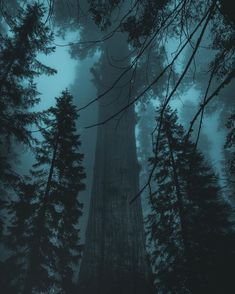 Scenery Photography, Forest Photography, Outdoor Photography, Photography Tips, Digital Photography, Mysterious Photography, Landscape Photography, Photography Courses, Night Photography