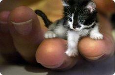 Самый-маленький-котенок