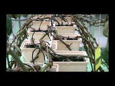 The urban farms of today - economist.com/video