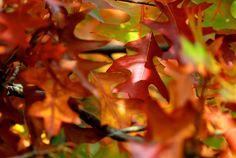 Autumn Spirit by NorthernLand.deviantart.com on @deviantART