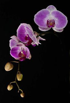 Tiny Purple Orchids