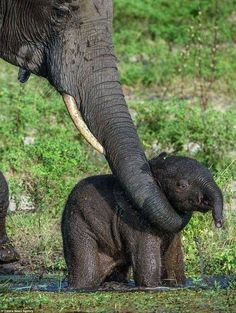 Is there anything more adorable than a baby elephant? No. No there is not.