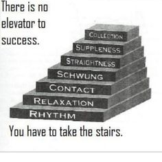 There is no elevator to success. You have to take the stairs of the dressage…