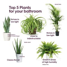 Plants for bathrooms Best plants for bathrooms Best bathroom plants . Plants for bathrooms Best plants for bathrooms Best bathroom plants . outfit ideas, shopping and street style I .