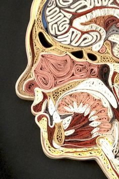 Post image for Cross-Sections of the Human Body by Lisa Nilsson