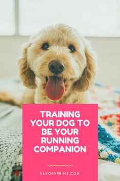 Training Your Dog to Be Your Running Companion | Savory Prime Pet Treats
