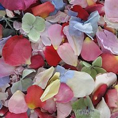 Box of 3,000 Freeze Dried Petals || Mixed Flower Petal Blend || Freeze Dried Petals and Wedding Flowers at Wholesale Prices