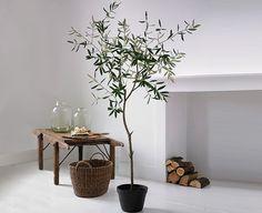 an olive tree inside? Olivier En Pot, Potted Olive Tree, Succulent Hanging Planter, Indoor Flowering Plants, Interior Decorating, Interior Design, Dream Home Design, Outdoor Landscaping, Green Life