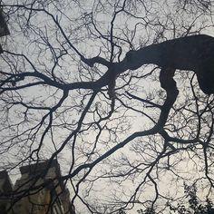 🌳😍☁ #árvore #tree #céu #sky #SãoPaulo #VilaLeopoldina #essepe #Brasil #andanças #FêPorAí