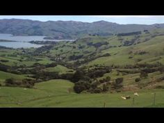 Check out the shearing process that is used to produce the wool for our Wool Products-- Wool Harvesting in Paradise (New Zealand) Bay Lodge, Sheep Shearing, River Camp, Future Farms, World Geography, Wool Carpet, New Zealand, Paradise, Island