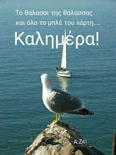 Greek Quotes, Summer, Photos, Animals, Greek, Animaux, Summer Recipes, Animales, Summer Time