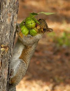 Almost there! Those squirrels and their nuts!