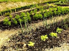Vegetable Gardening in the Desert | Garden Guides - Good suggestions on keeping healthy soil and water reminders