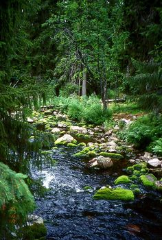 Beautiful Swedish forests. You can just imagine all the fairies and nymphs floating around.. Njupeskär - Sweden's highest waterfall