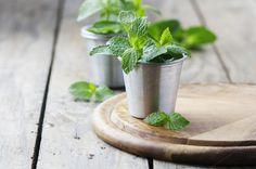 Green fresh mint by oxana.denezhkina on @creativemarket
