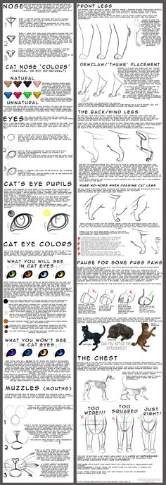 Learn to Draw # Human Body + Perspective + Animals Aprenda a Desenhar Corpo Humano+Perspectiva+Animais Learn to Draw # Human Body + Perspective + Animals Drawing Lessons, Drawing Techniques, Drawing Tips, Dream Drawing, Drawing Drawing, Drawing Sketches, Warrior Cats, Animal Drawings, Art Drawings