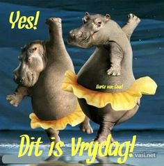 dance animals - Page 2 Happy Week, Happy Saturday, Happy Friday, Dancing Animals, Afrikaanse Quotes, African Proverb, Dance Movement, T Art, Animal 2