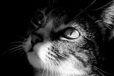 Image result for cute black and white  cat photos with a black background