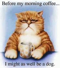 Explanation for grumpy #cat  Before my morning #coffee... I might as well be a dog.